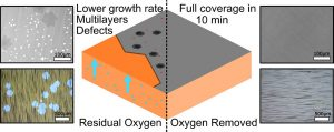 The Role and Control of Residual Bulk Oxygen in the Catalytic Growth of 2D Materials
