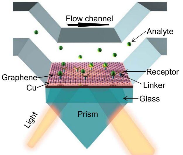 Layered material platform for surface plasmon resonance biosensing