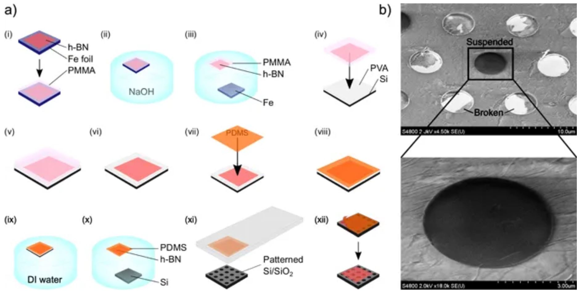 Mechanical characterization and cleaning of CVD single-layer h-BN resonators