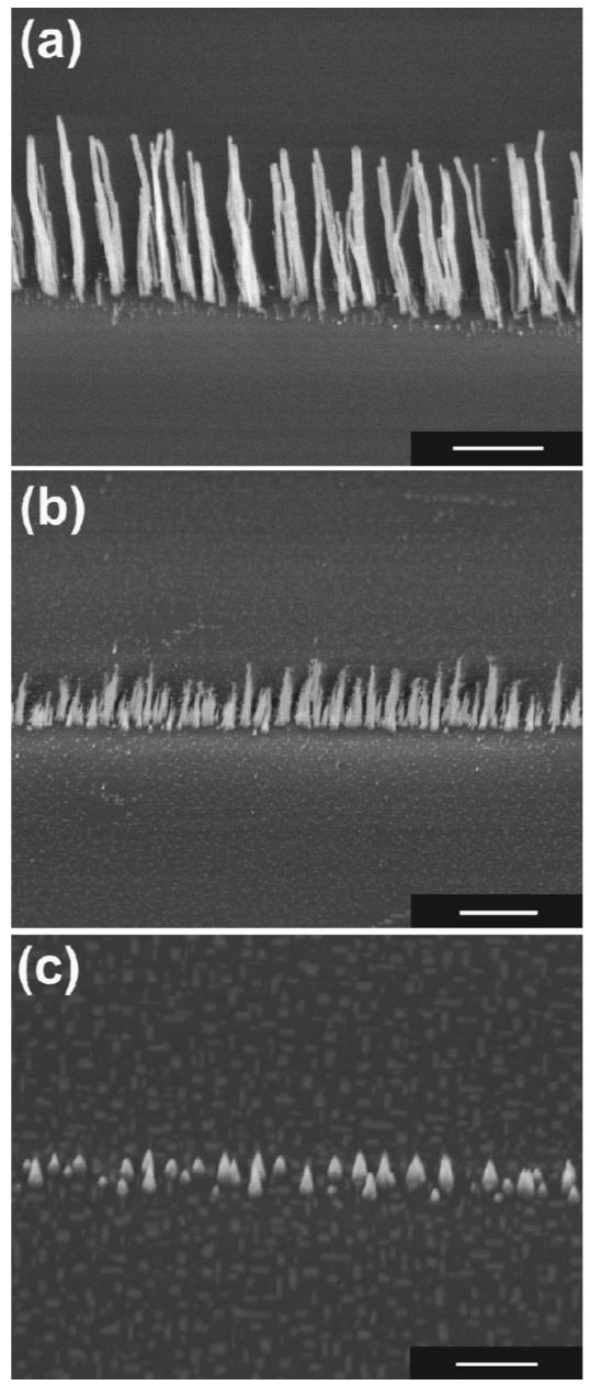 Low-temperature growth of carbon nanotubes by plasma-enhanced chemical vapor deposition