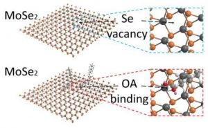 Giant Photoluminescence Enhancement in MoSe2 Monolayers treated with Oleic Acid Ligands